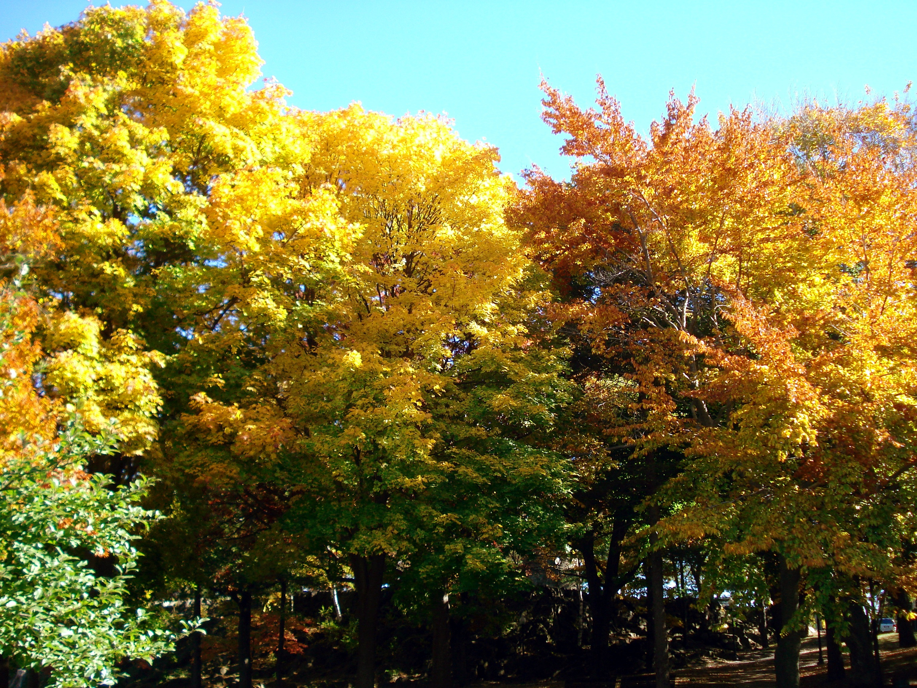 All-Color-Trees.jpg